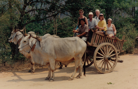 Oxcart tourist ride