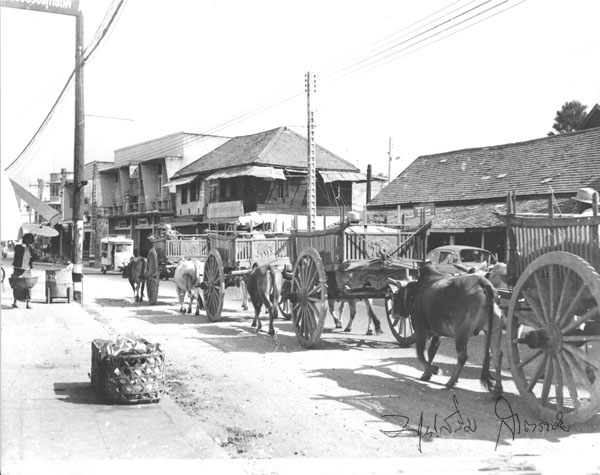 Ox carts in Chiang Moi road