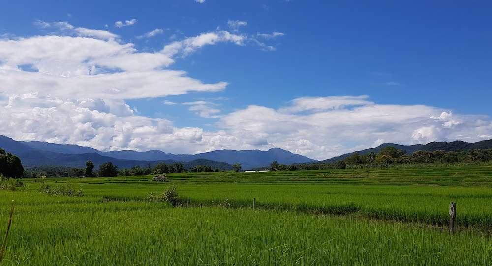 Salween Consular Tour Pai paddyfield